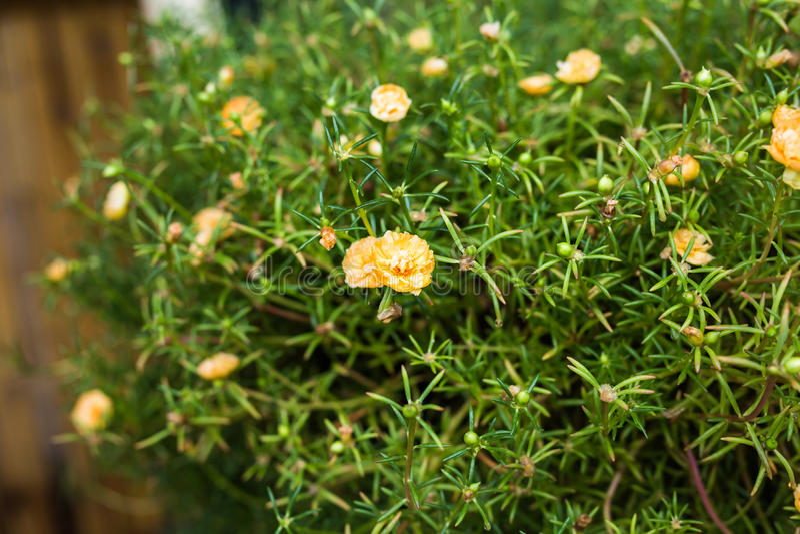 Download 春天或夏天背景与美丽的黄色花 库存照片. 图片 包括有 新鲜, 蓝蓝, 开花, beauvoir, 公园 - 72354918