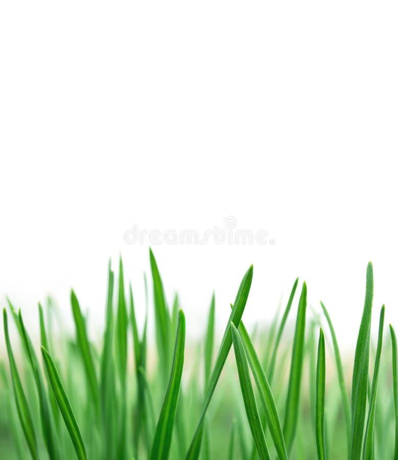 春天或夏天自然本底与新鲜的草 库存照片