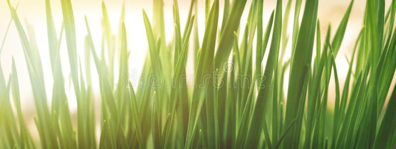春天或夏天自然本底与新鲜的草 库存图片