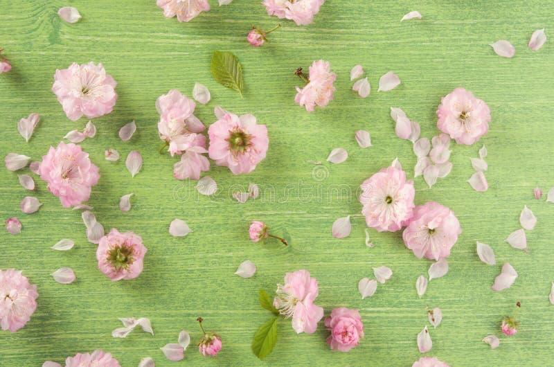 春天或夏天自然背景 桃红色杏仁花、芽、叶子和瓣在绿色木桌背景,平的位置 库存照片