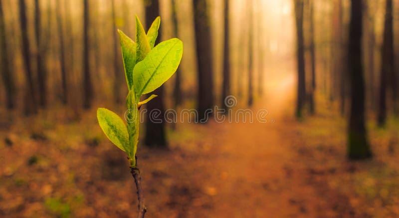 春天日出的森林 免版税库存图片