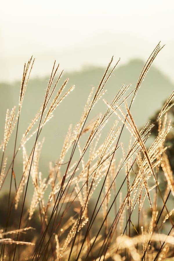 春天早晨,发光在与露水在山峰,山脉被弄脏的背景的野花的日出 免版税库存照片