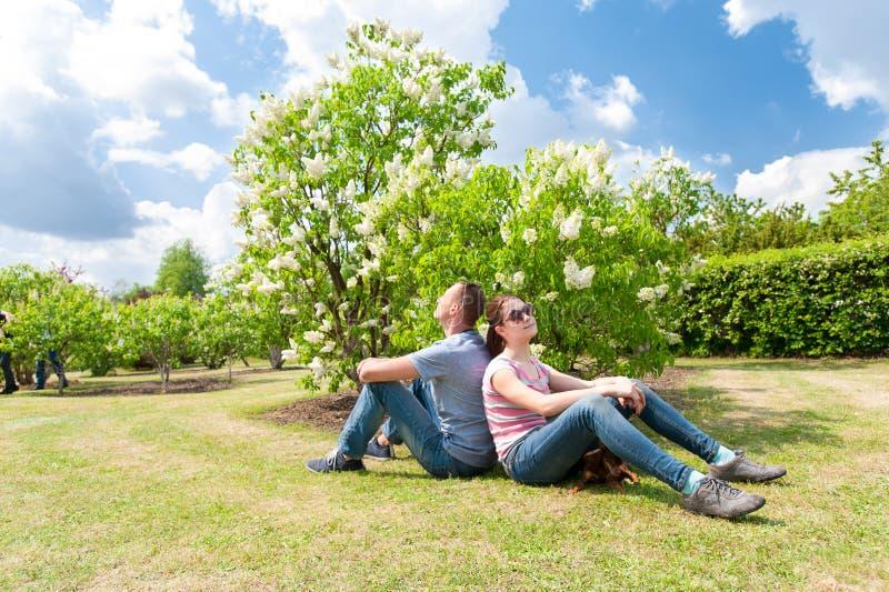 春天是休息在白色淡紫色灌木附近的来临家庭 库存图片