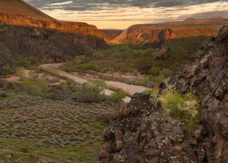 春天最初的少数globemallow花在玄武岩露出增长在维尔京河谷上的在犹他南部 免版税库存照片