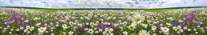 春天有开花的花的风景全景在草甸 库存图片