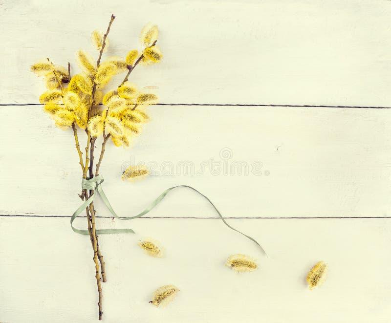 春天有柔荑花的猫杨柳枝杈在轻的木背景 免版税库存照片