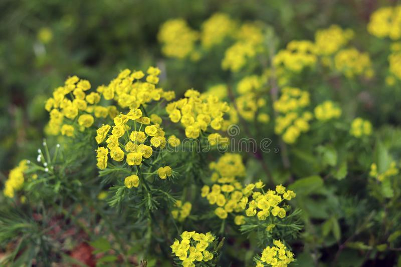 春天有花的乡下草甸 中立背景的抽象关闭 免版税库存照片