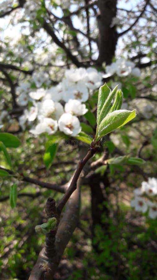 春天来临到自然和我们的心脏 免版税图库摄影