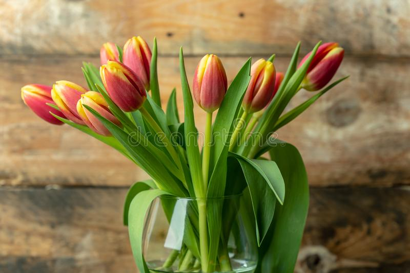 春天来临-在未加工,土气,木背景的春天橙黄郁金香 图库摄影