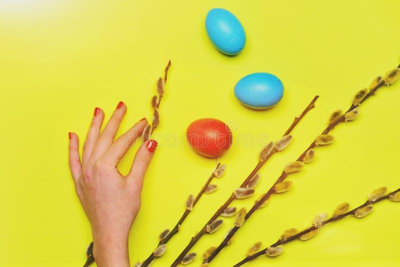春天杨柳分支,女性手用五颜六色的被绘的复活节彩蛋 免版税图库摄影