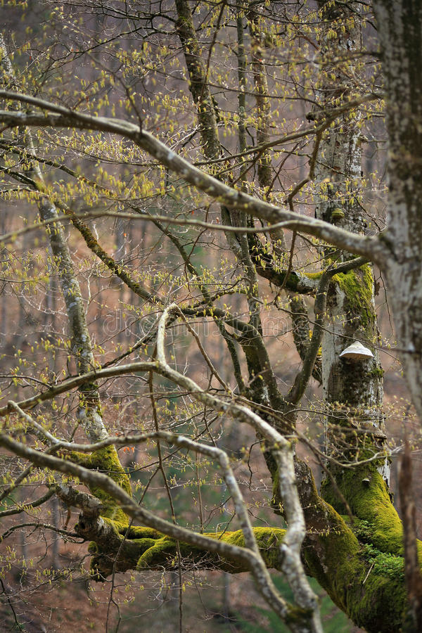 春天树在公园 4月新鲜的叶子 库存图片