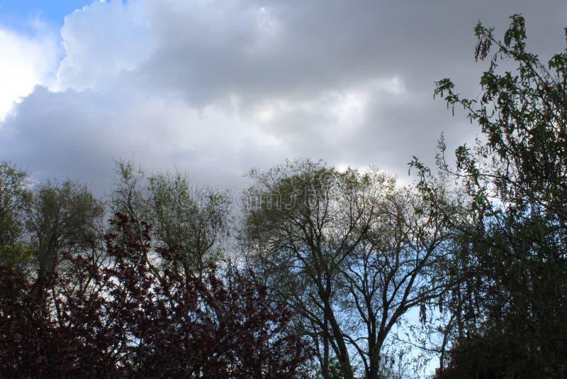 春天树,叶子开了花,等待雨在灰色天空下 免版税库存照片