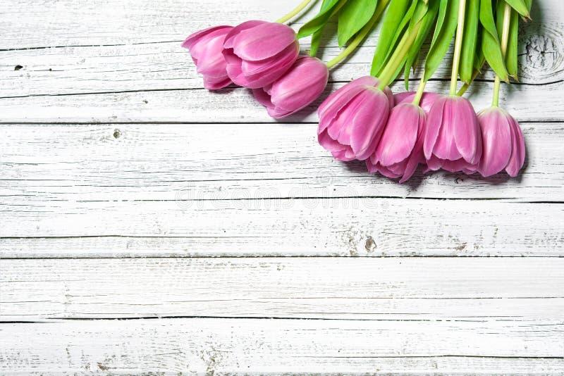 春天桃红色郁金香花束  库存照片