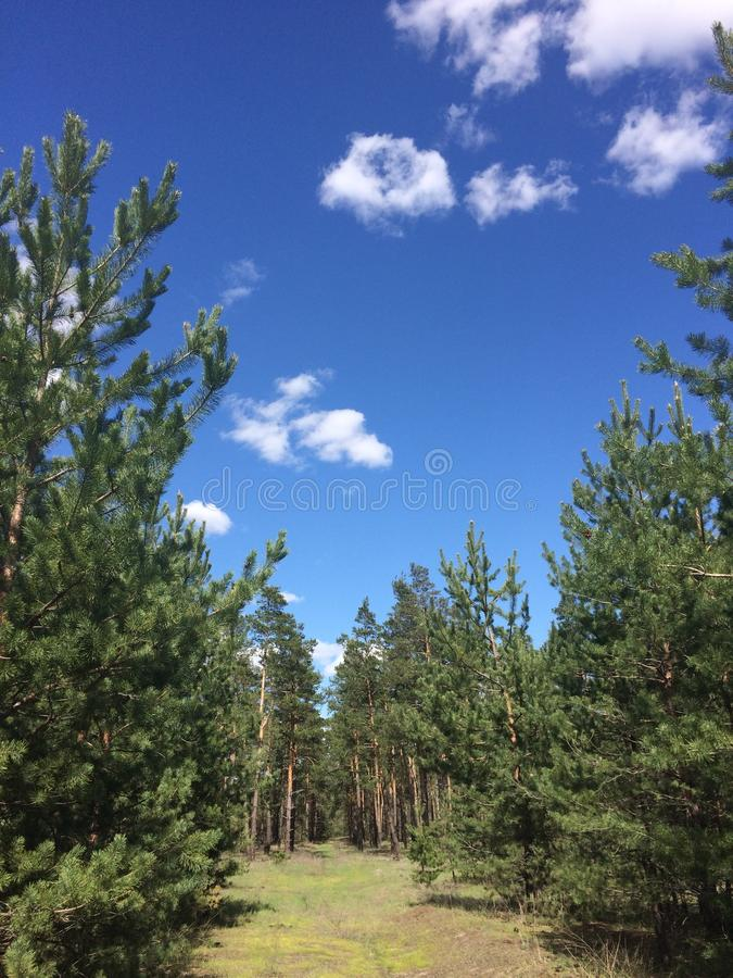 春天森林好天气 天山 库存图片