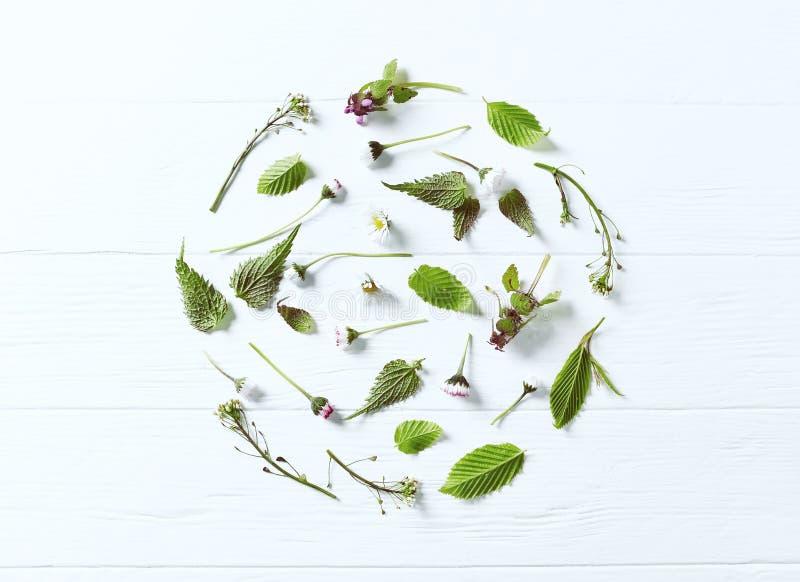 春天植物和花的安排 免版税库存照片