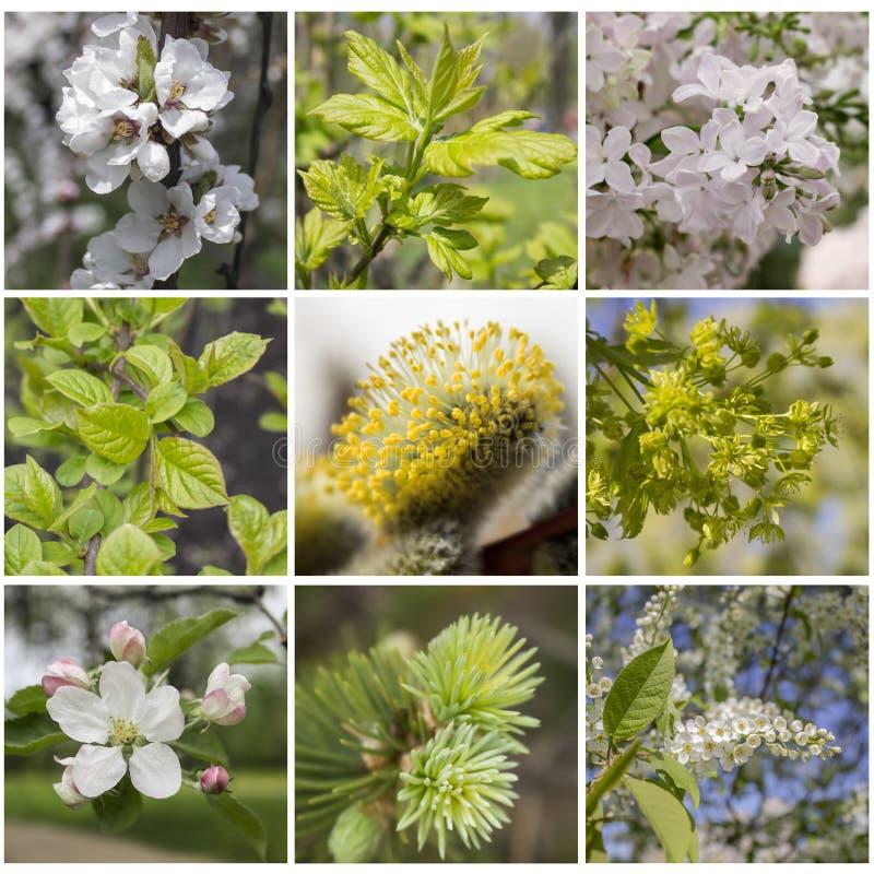春天植物拼贴画 图库摄影