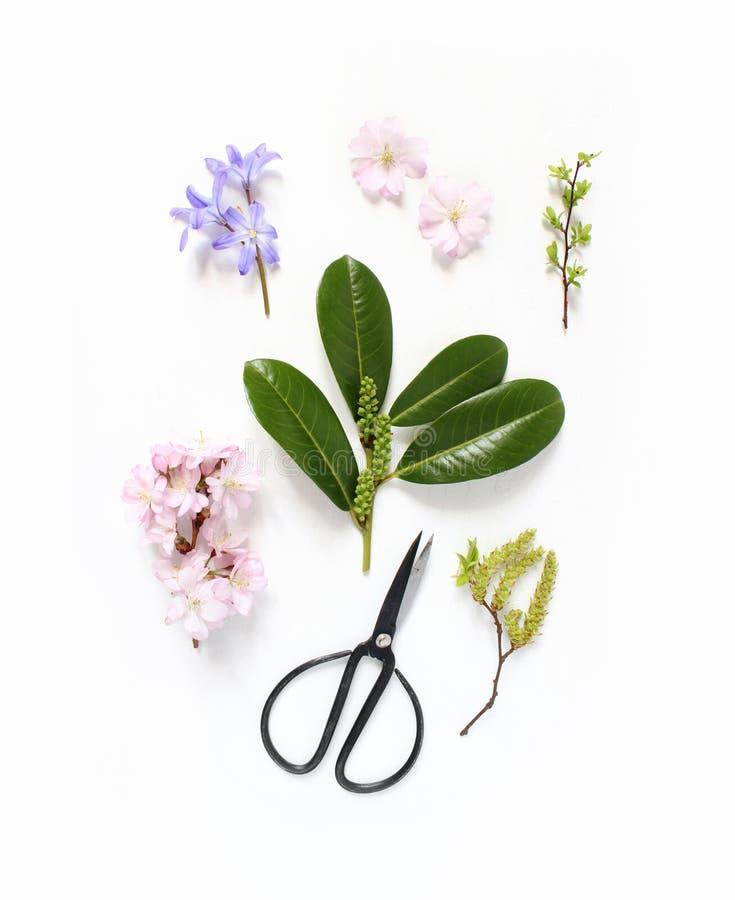 春天植物的花卉构成 桃红色日本樱花、蓝色scilla花和常青英国月桂树 免版税库存照片