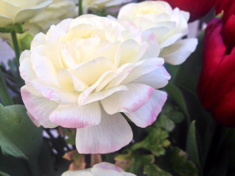 春天植物群 库存照片