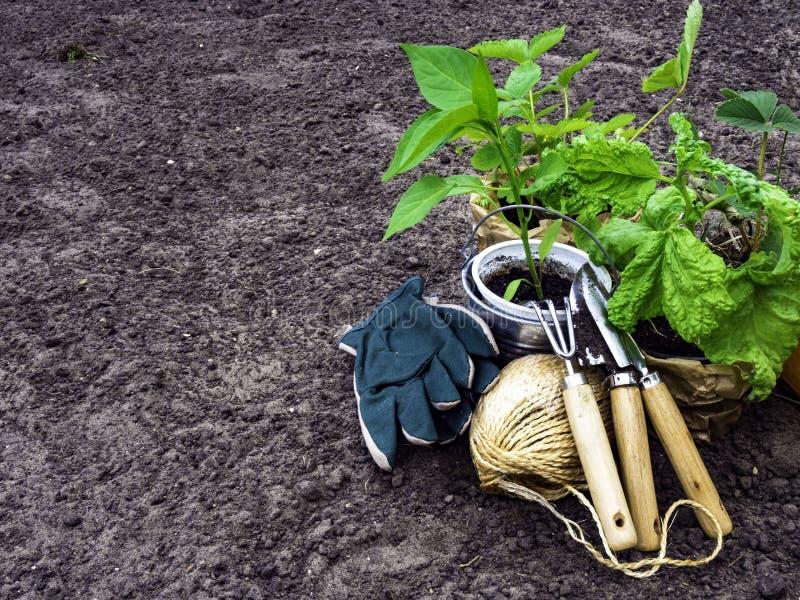 春天概念,为从事园艺的园艺工具,幼木,季节性庭院工作 免版税库存图片