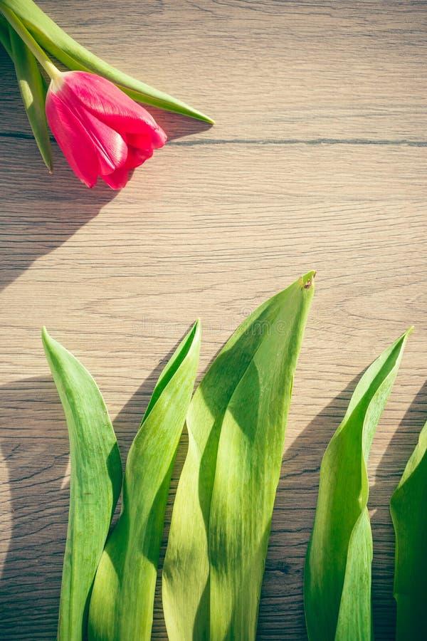 春天概念-在木背景的郁金香叶子 库存图片