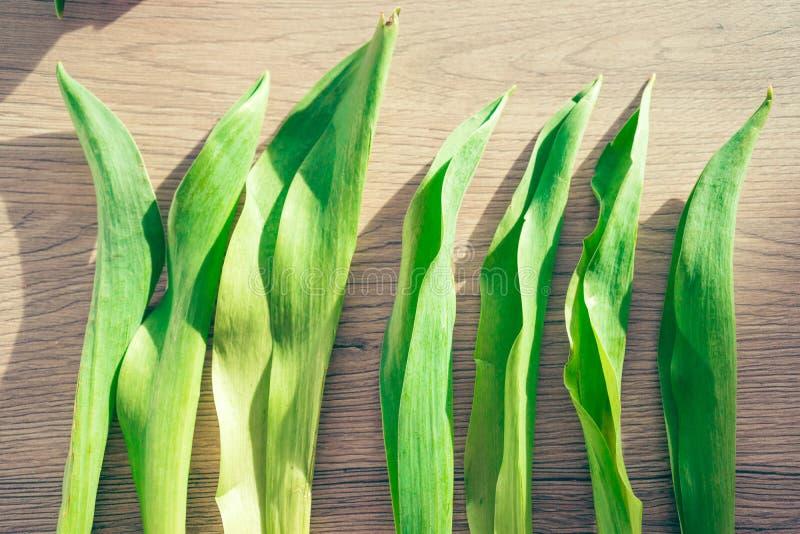 春天概念-在木背景的郁金香叶子 免版税库存图片