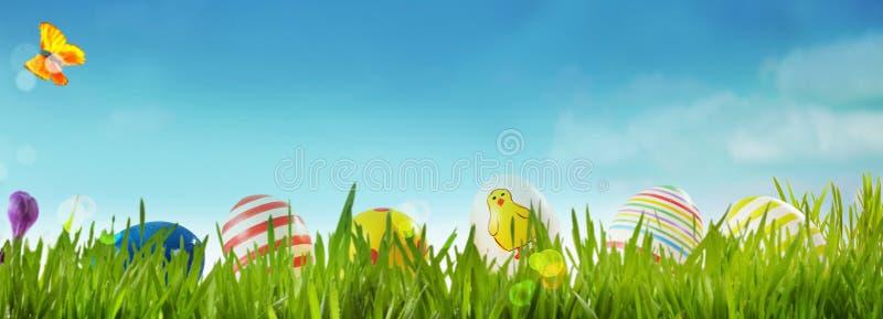 春天横幅用复活节彩蛋在草甸 免版税库存图片
