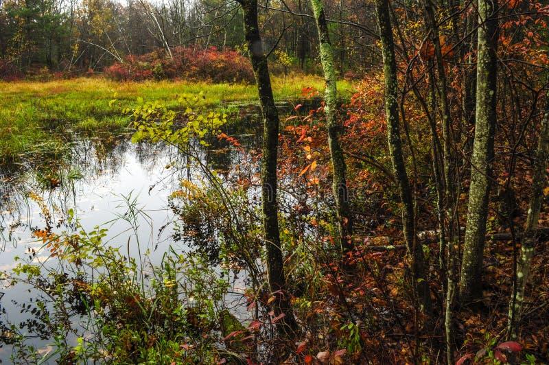 春天池塘、威尔敦公园和蜜饯,萨拉托加县,纽约 免版税库存照片