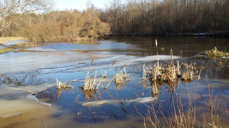 春天河 被填装的洪泛区 免版税图库摄影