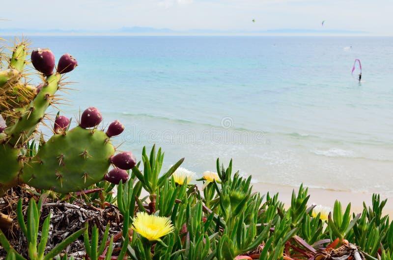 春天海滩Valdevaqueros 免版税图库摄影