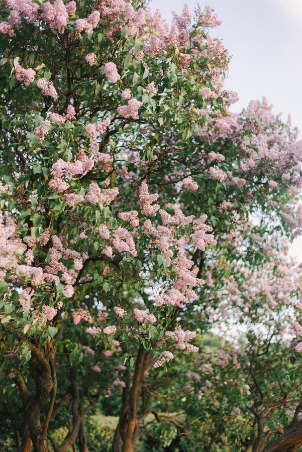 春天灌木 免版税库存照片