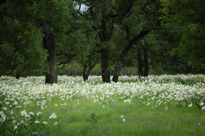 春天牧场地在中央得克萨斯 图库摄影
