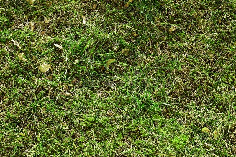 春天生长背景的草开始 库存图片