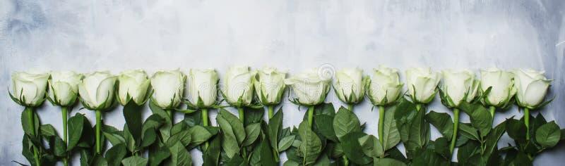 春天白玫瑰,灰色背景,顶视图 免版税库存图片