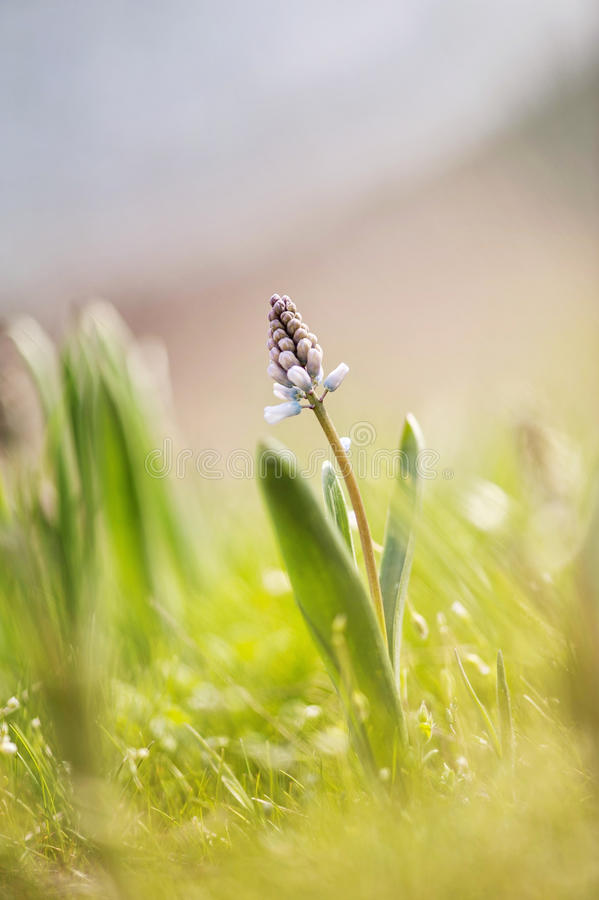 春天的所有亮光 库存图片