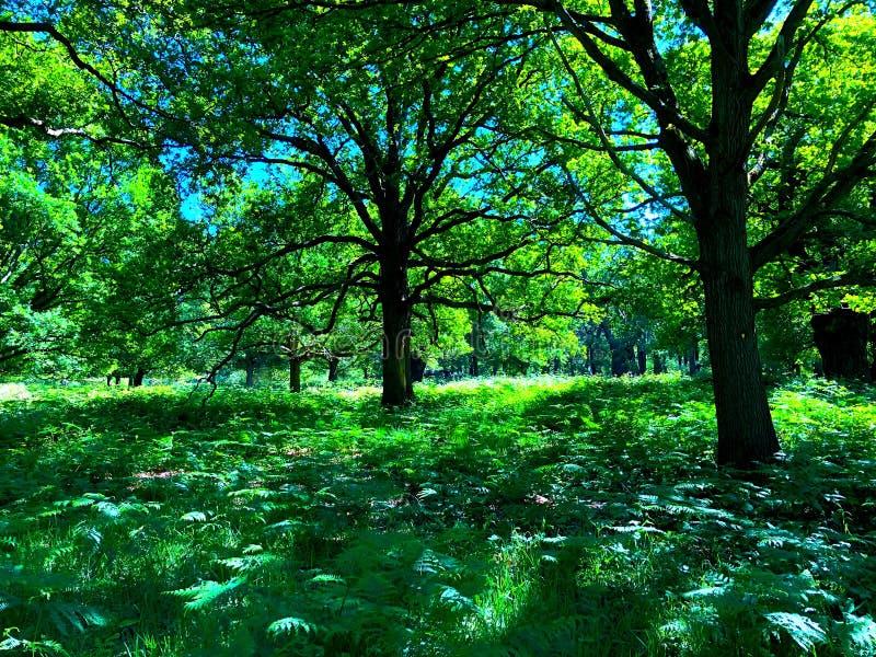 春天的树冠 免版税库存图片