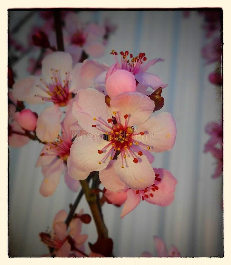 春天的符号 库存照片