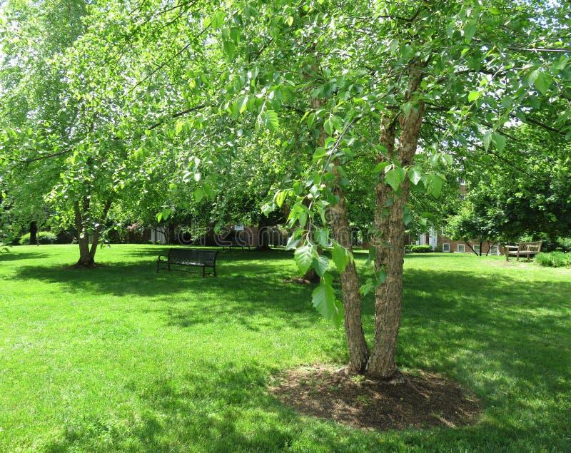 春天的绿色公园 库存照片