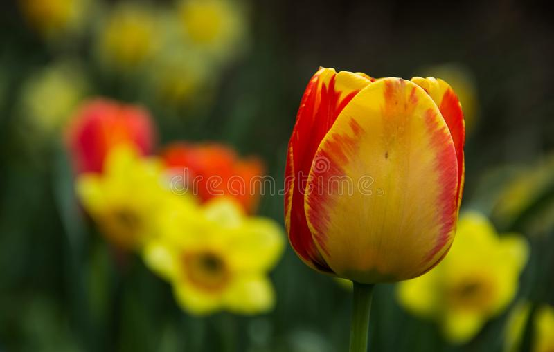 春天的颜色 库存照片