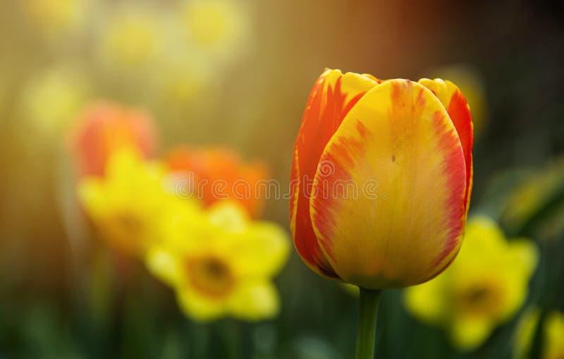 春天的颜色 免版税库存图片
