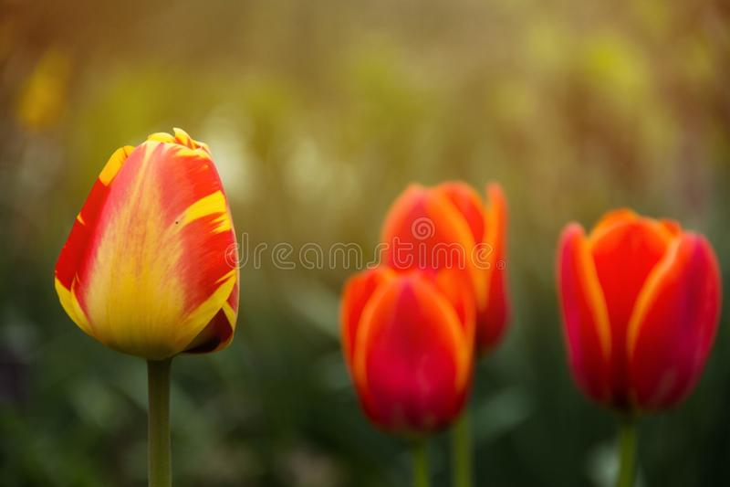 春天的颜色 免版税库存照片