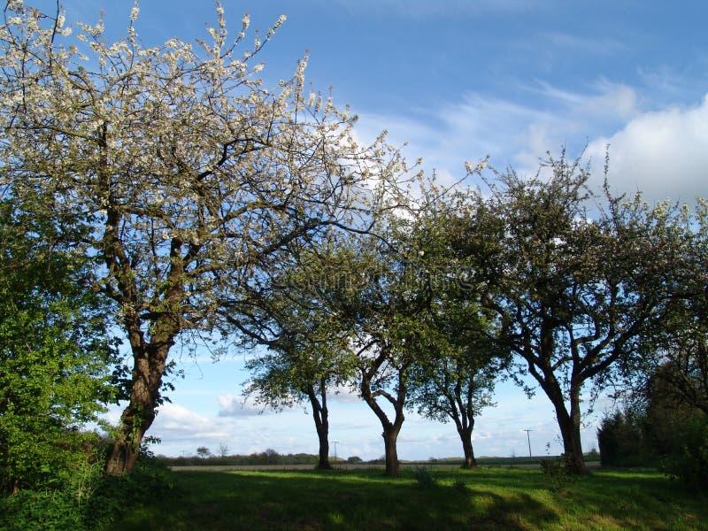 春天结构树 免版税图库摄影