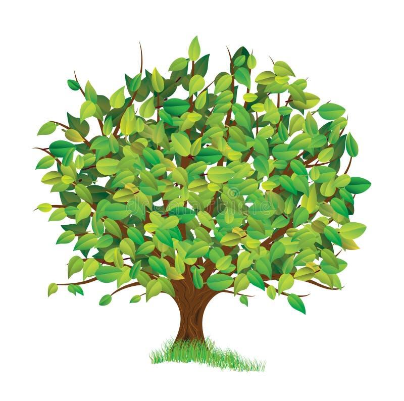 春天结构树 库存例证