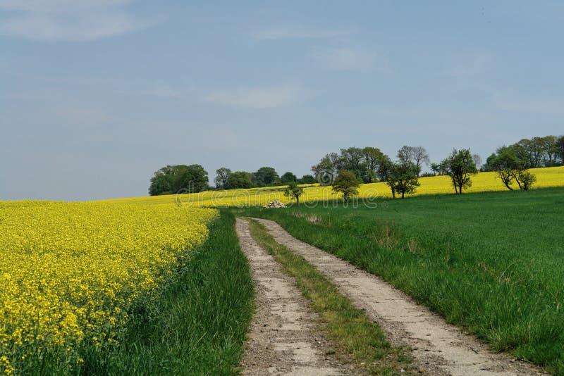 春天结构 免版税库存图片