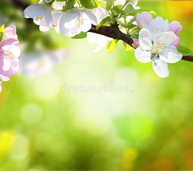 春天背景 免版税图库摄影