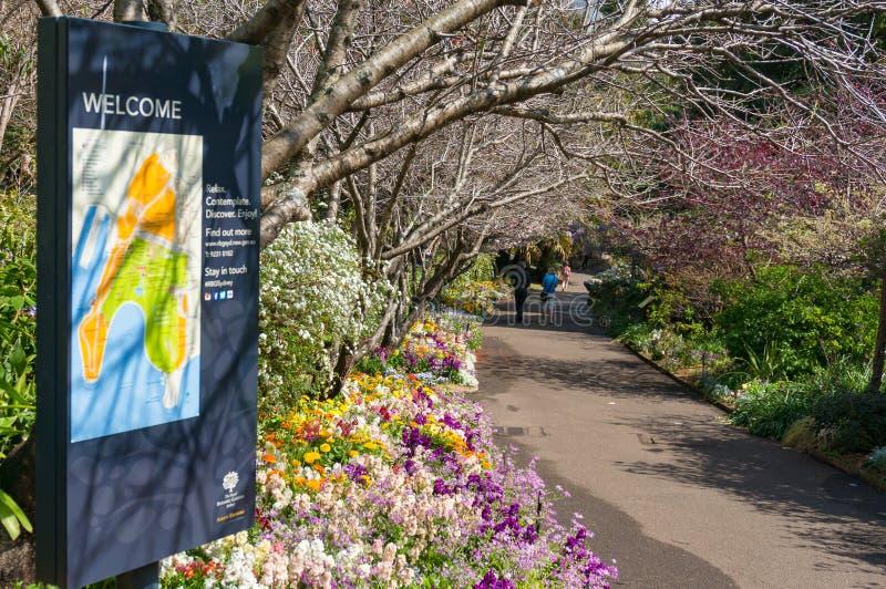 春天胡同在悉尼皇家植物园里 库存图片