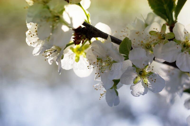 春天自然与开花的艺术背景 库存照片