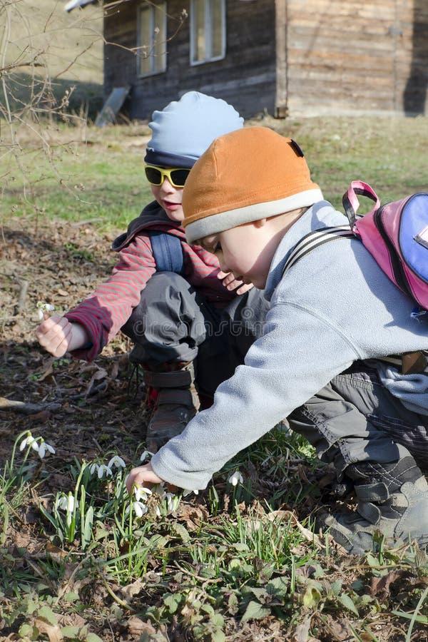 春天自然的孩子与snowdrops 库存图片