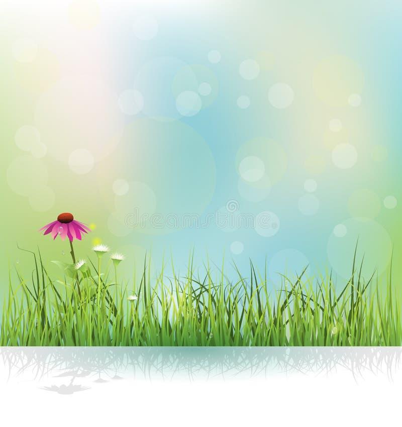 春天自然领域、绿草、白花草甸和海胆亚目(紫色coneflower)开花 库存例证