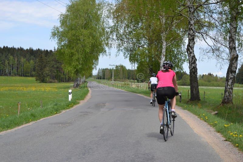 春天自行车骑马通过树大道 库存图片