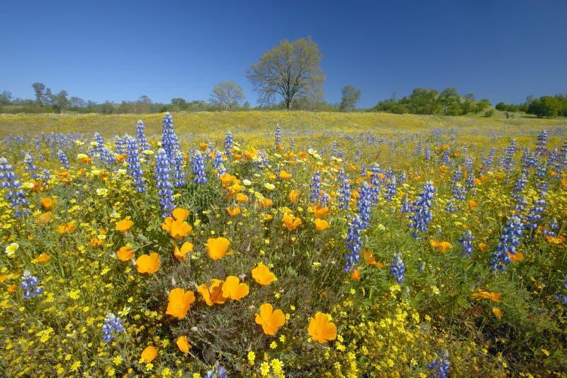 春天花五颜六色的花束  库存照片
